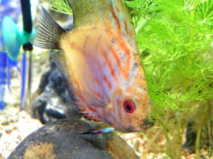 fish fary