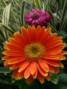 flower un