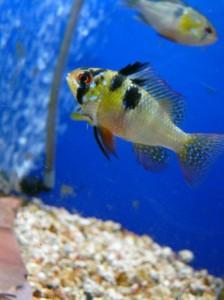 fish fu
